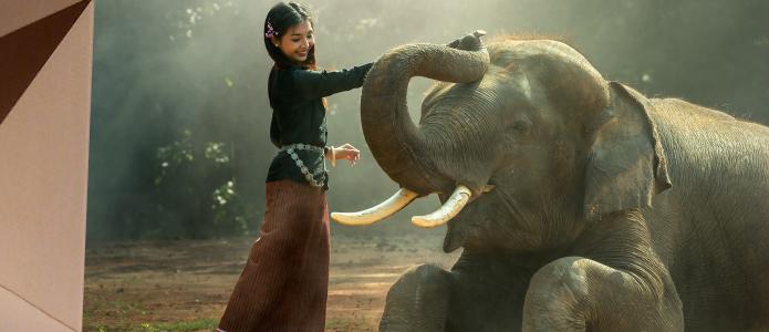 Слон-13
